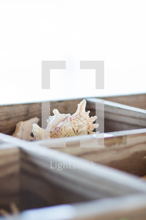 seashells in a wooden box