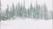 falling snow in an evergreen forest
