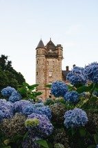 hydrangeas and castle tower