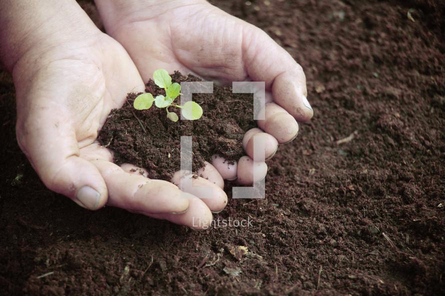 Gardener holding seedlings