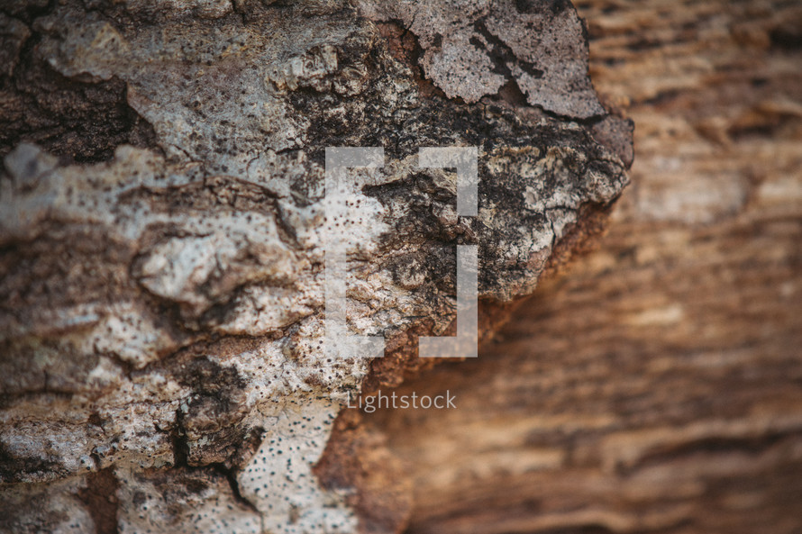 Peeling, weathered tree bark.