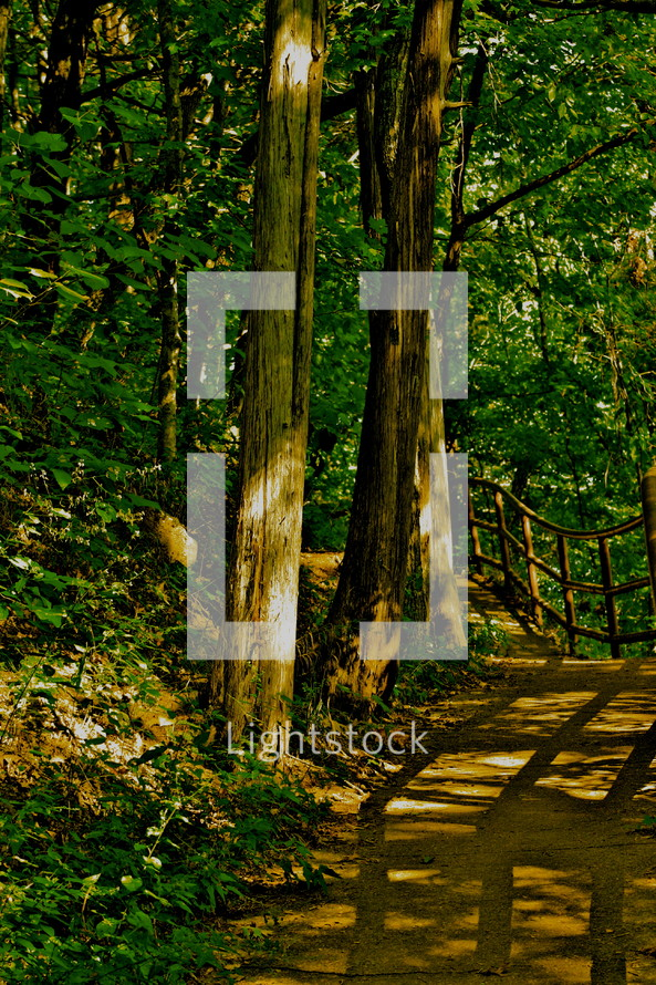path through forest - trees -