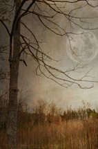 full moon behind a bare tree in a field