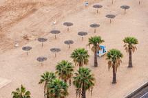 palm trees on a beach in Teneriffa, Spain