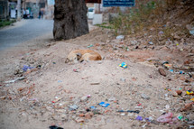 sleeping stray dog in Mandawa, India