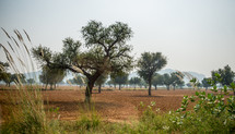 trees and landscape of Mandawa, India