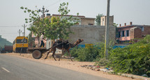 a camel pulling a wagon in Mandawa, India