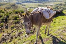 a donkey on a mountaintop