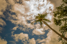 clouds over a palm tree