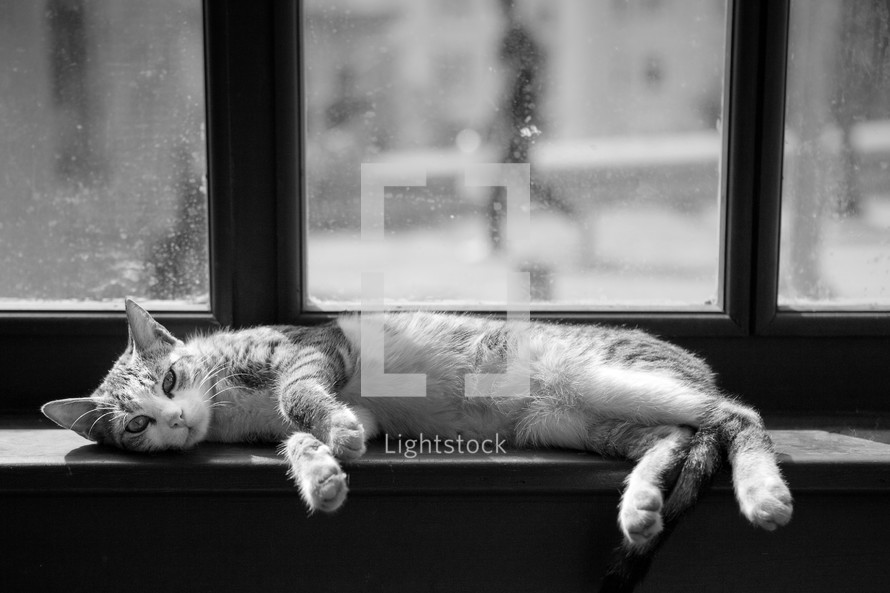Cat lying on window sill