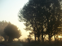 A morning sunrise burns away the fog surrounding a group of trees next to a country road and fence surrounded by the early morning light.