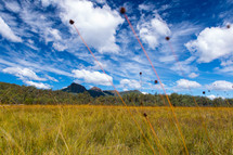 Field of grass.
