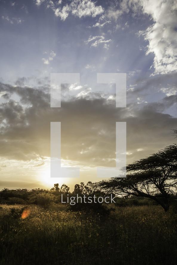Open field at sunset