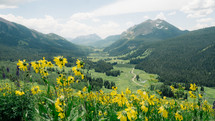 yellow flowers on a mountain