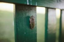 tree frog on a fence