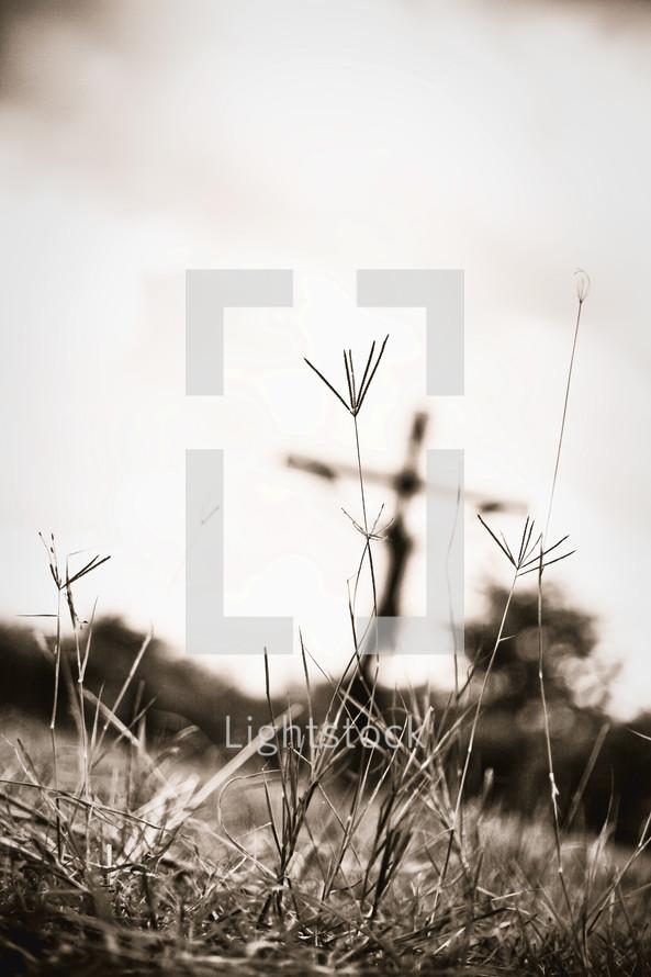 Cross in wheat field