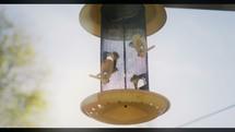 empty bird feeder