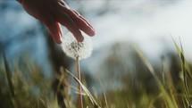 a toddler girl picking a dandelion