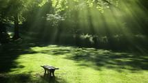 sunbeams over a bench in a garden