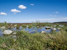 shallow water in marshlands of Öland, Sweden