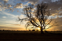 tree with bare branches in a field at sunset