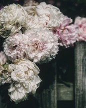 soft white and pink flowers