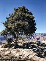 tree and canyon view