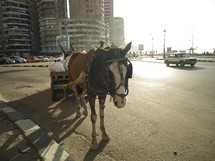 a horse pulling a wagon on the streets of Alexandria, Egypt