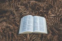 open Bible on ferns