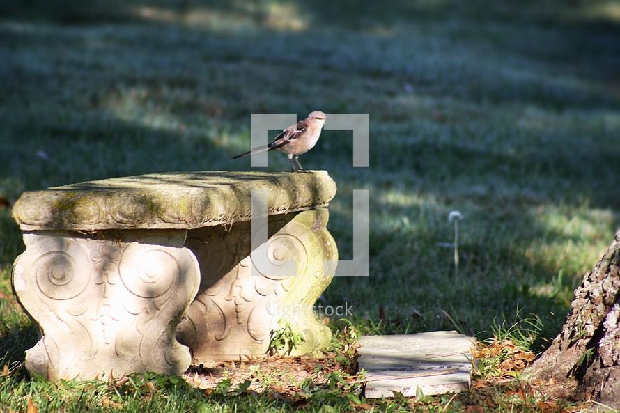 mocking bird on a stone bench
