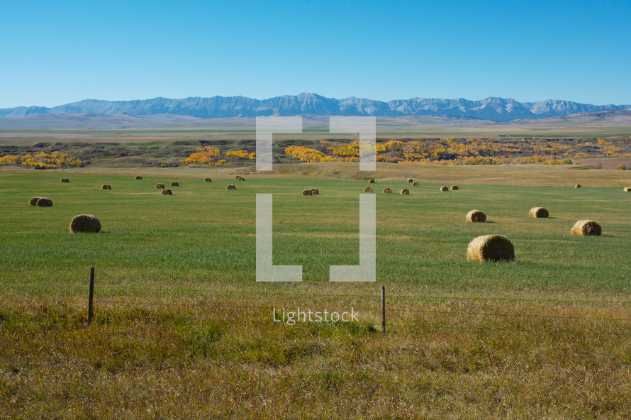 hay bales in a field in front of the Rocky Mountains