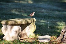 mocking bird on a stone bench