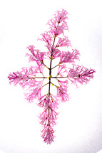A cross made of Lilac flowers appearing on a white background