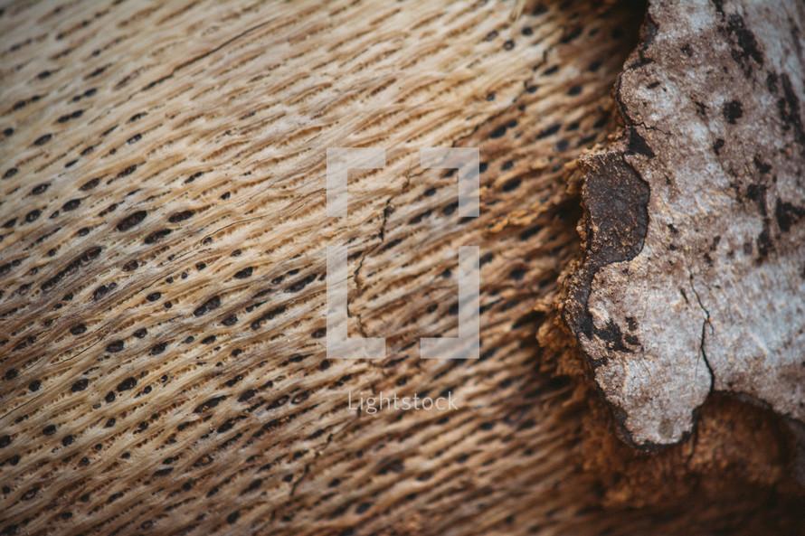 Peeling, weathered tree bark.