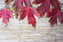 red fall leaves on brown background