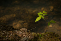 sapling on a forest floor