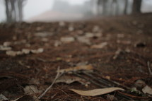 leaves and pine straw on the ground