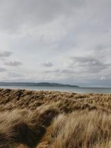 brown grasses along a shore