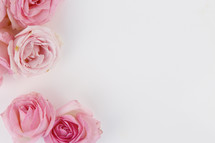 border of pink roses on a white background