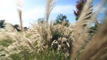 tufts of tall grasses blowing in the breeze