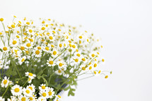 white daisies in a bag