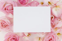 white paper on pink roses