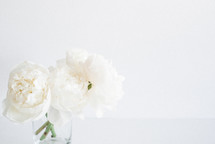 White flowers in a clear vase on a white background.