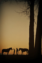 Horses under trees at sunset