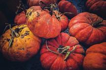 muddy pumpkins