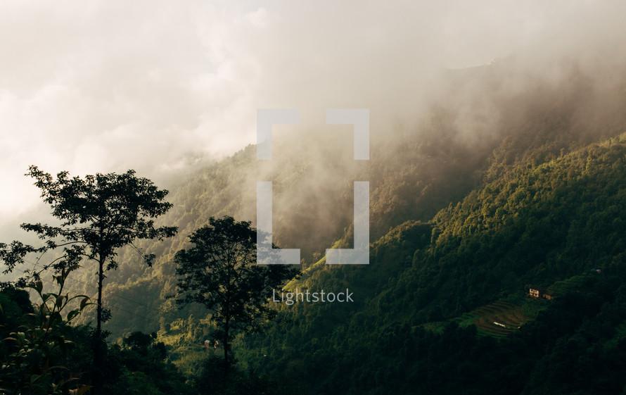 fog over a green mountainside