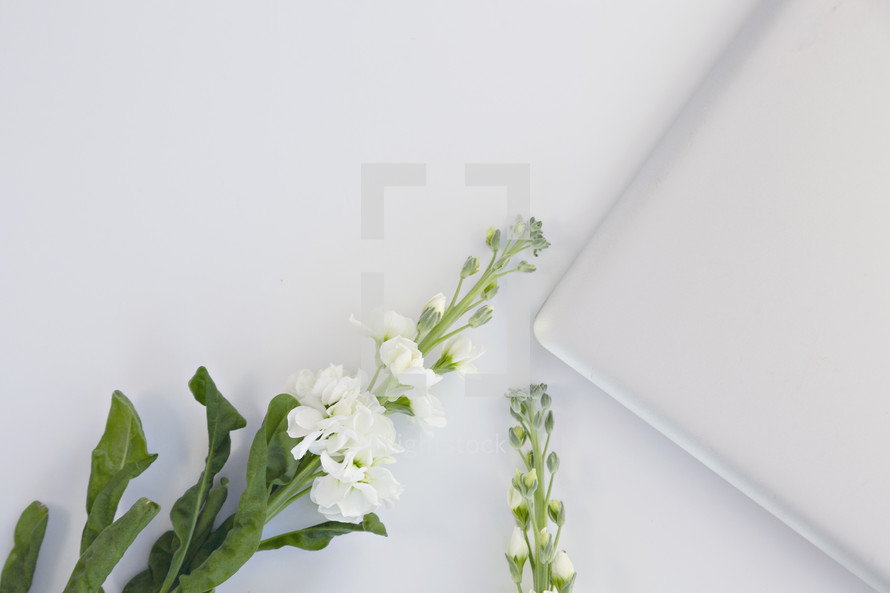 white flowers and laptop computer