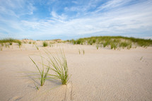 Tall grass growing from sand dunes with cloudy blue sky