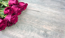roses on a wood background,