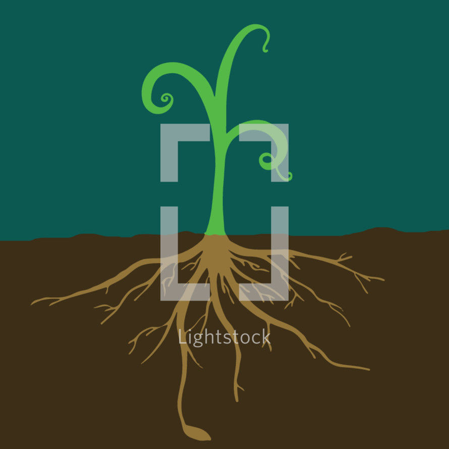 roots on a sprout
